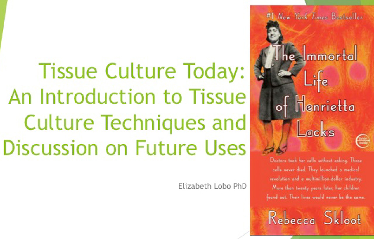 Faculty Lecture Series: Elizabeth Lobo