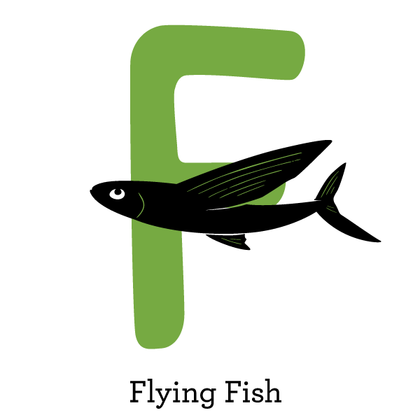 flying fish level