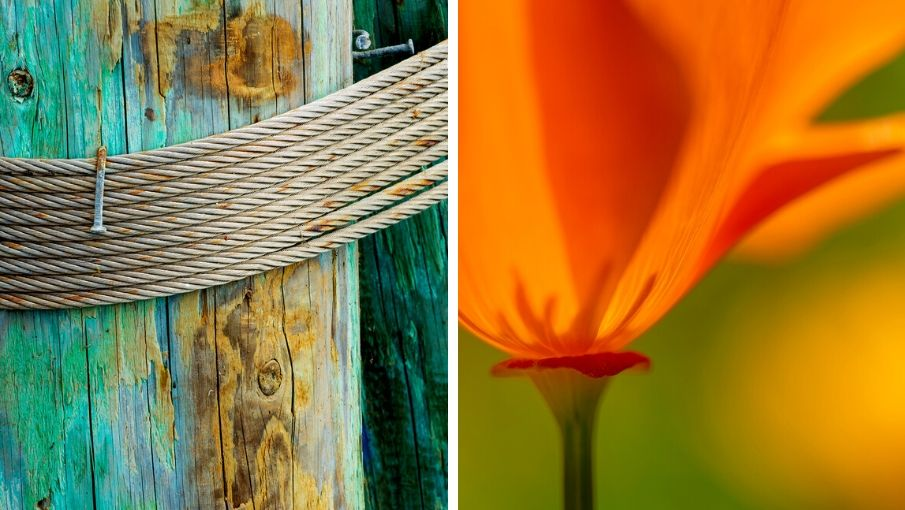 Pier post, poppy, and old wood