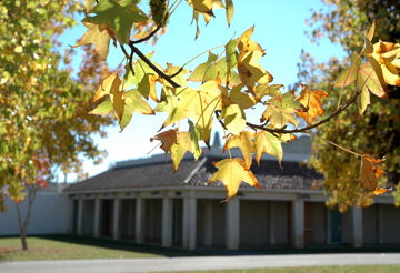 SLO Campus outside shot with leaf
